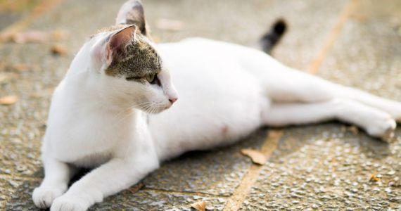 Сонник держать беременную кошку