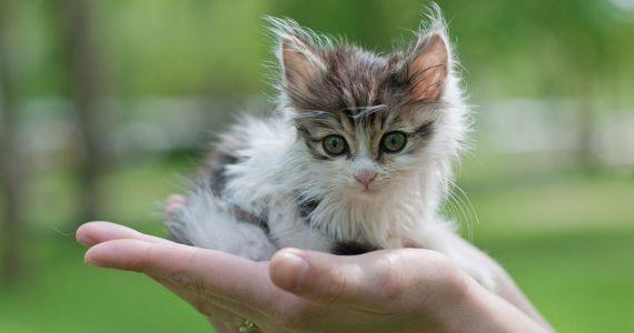 К чему снится много маленьких котят{q}