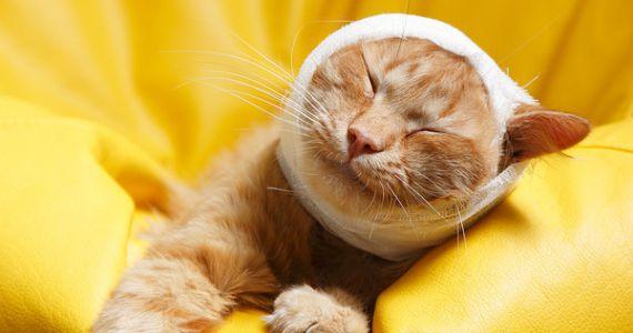 К чему снится свой раненый кот thumbnail