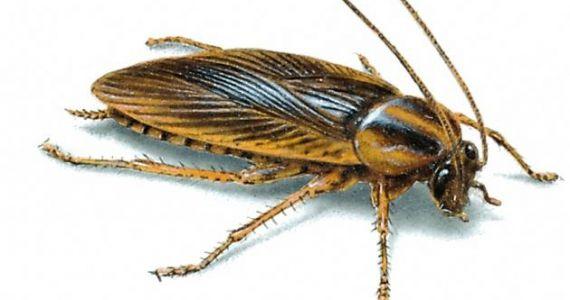 Видеть во сне больших тараканов