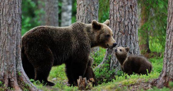 К чему снится медвежонок женщине и мужчине сонник