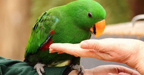 Видеть во сне большого попугая в руках thumbnail