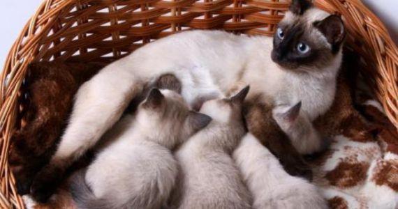 К чему снятся много котов и кошек