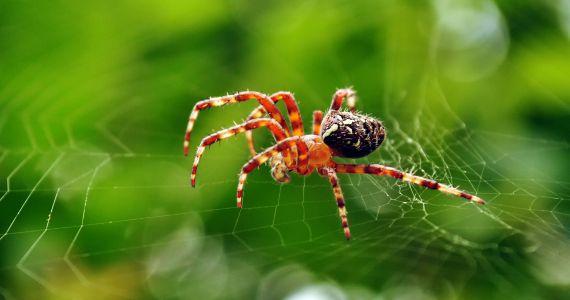 К чему снится видеть во сне паука и паутину что предвещает сновидение