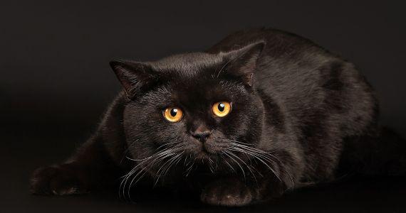 Если во сне снится черный кот
