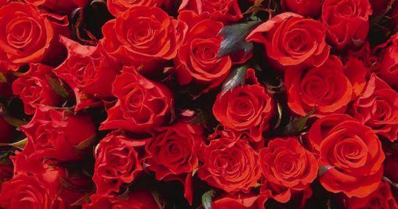Красный цветок сон