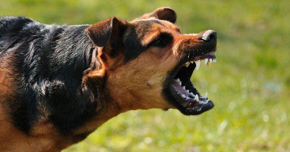 Сонник злые собаки пытаются напасть
