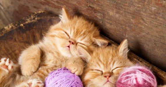 Сонник рождаются котята