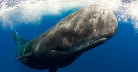 Ушлунку мертвого кита виявили 29 кілограм пластику