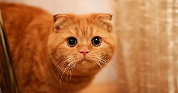 Женский сонник – кот во сне, к чему снится рыжий, черный, белый, большой кот?