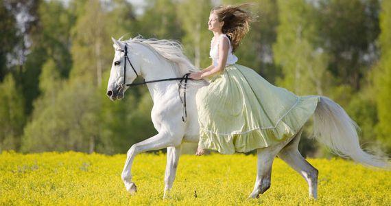 Белый конь во сне. К чему снится белый конь?